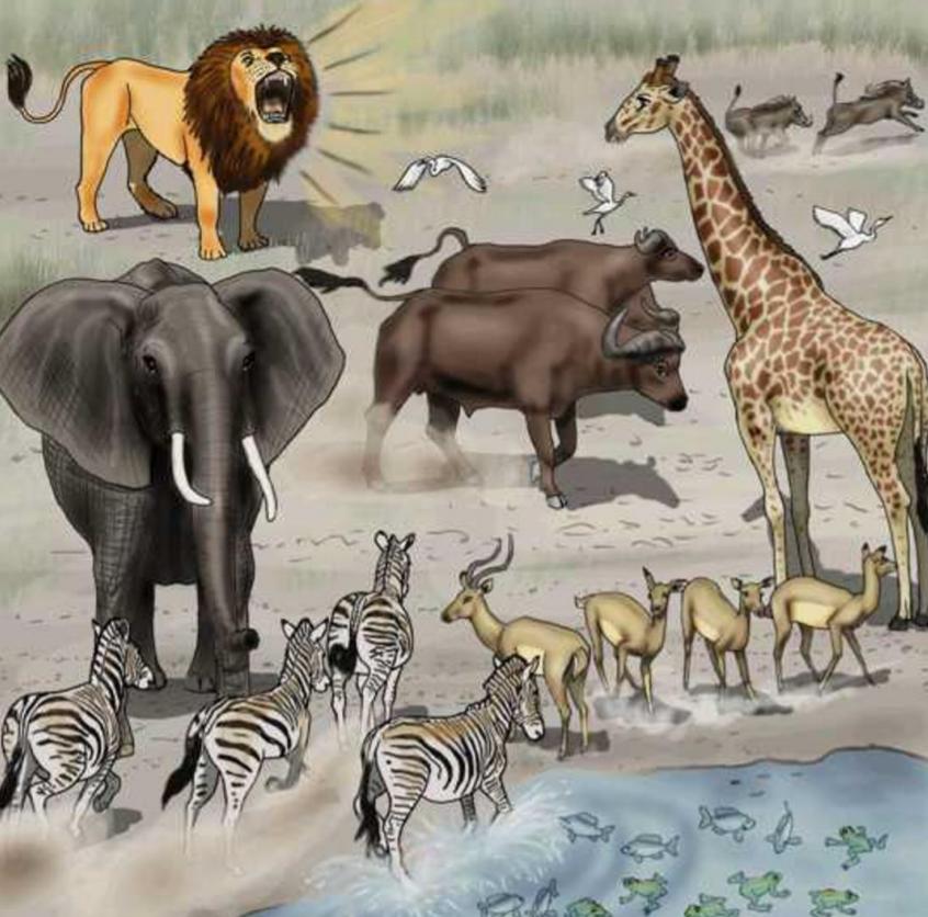 《數下有幾多動物》Counting Animals